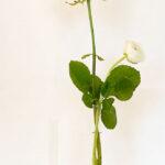 Reagenzglasvase in Chrom glänzend oder Edelstahloptik für einzelene Blume